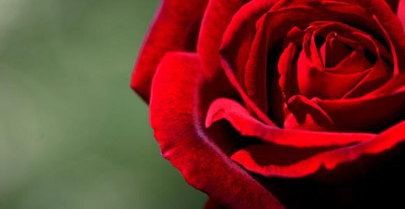 Crimson-day-celebrations 22
